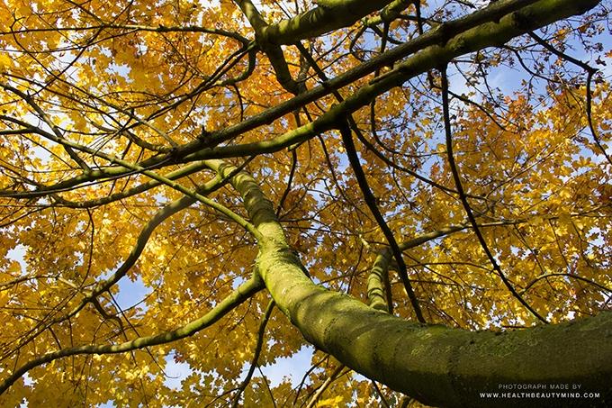 onderaanzicht boom in de herfst